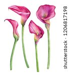 Set Of Pink Calla Lily...