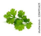 fresh green plant  nutritious ... | Shutterstock .eps vector #1206951625