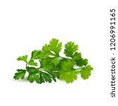 fresh  nutritious  tasty green... | Shutterstock .eps vector #1206991165