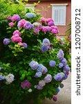 colorful hydrangea flowers   Shutterstock . vector #1207008712