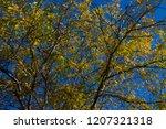 brilliant  yellow  autumn  ... | Shutterstock . vector #1207321318