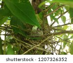 the  newborn bird hatched from... | Shutterstock . vector #1207326352