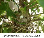 the  newborn bird hatched from... | Shutterstock . vector #1207326655