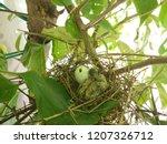 the  newborn bird hatched from... | Shutterstock . vector #1207326712
