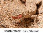 kotschy's gecko lizard  also...   Shutterstock . vector #120732862