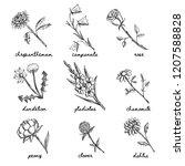 hand drawn garden and wild... | Shutterstock .eps vector #1207588828