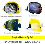 Tropical Butterflyfish Set....