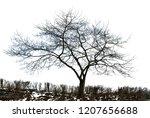 realistic tree silhouette in... | Shutterstock . vector #1207656688