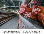 noise and blur some chicken ... | Shutterstock . vector #1207745575