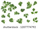 green leaves of parsley... | Shutterstock . vector #1207774792