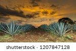 sunset landscape of a tequila...   Shutterstock . vector #1207847128