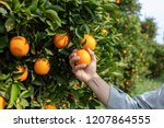close up hand and oranges in... | Shutterstock . vector #1207864555