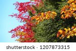 close up  dof  drying leaves on ... | Shutterstock . vector #1207873315