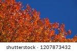 bottom up  close up  deciduous... | Shutterstock . vector #1207873432