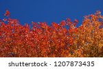 bottom up  close up  colorful... | Shutterstock . vector #1207873435