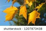 macro  dof  stunning yellow... | Shutterstock . vector #1207873438