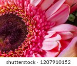 Pink Gerbera Daisy close-up viewed from the top and residing on the left side of the frame