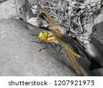 A Large Green Dragonfly With...