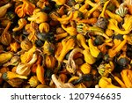 fall pumpkins and squash for... | Shutterstock . vector #1207946635