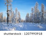 winter forest landscape  with...   Shutterstock . vector #1207993918