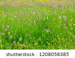 a beautiful colorful meadow... | Shutterstock . vector #1208058385