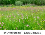 a beautiful colorful meadow... | Shutterstock . vector #1208058388