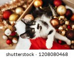 Stock photo cute kitty sitting in box with red and gold baubles ornaments and santa hat under christmas tree 1208080468