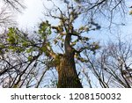 deciduous trees without foliage ... | Shutterstock . vector #1208150032