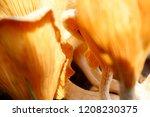 a lot macro of wood mushrooms.... | Shutterstock . vector #1208230375
