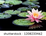 water lily  pond  park | Shutterstock . vector #1208233462