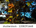 lush landscape of the south of... | Shutterstock . vector #1208291668