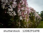 lush landscape of the south of... | Shutterstock . vector #1208291698