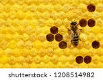Macro Photo Of Honey Bee On A...