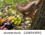 squirrel on a tree looking at... | Shutterstock . vector #1208543092