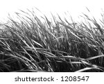 B/W Grass against White - stock photo