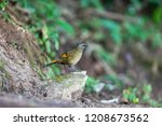 solid color noise bird living... | Shutterstock . vector #1208673562