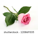 Stock photo pink rose 120869335