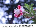look like rose flower  but it's ...   Shutterstock . vector #1208726128