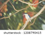 bird  collared kingfisher ... | Shutterstock . vector #1208790415