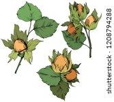 vector autumn plant hazel nut....   Shutterstock .eps vector #1208794288