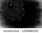 spider in spiderweb isolated on ... | Shutterstock . vector #1208880292