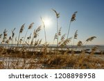 winter landscape with thickets... | Shutterstock . vector #1208898958