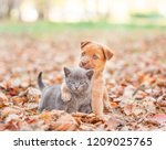 Stock photo homeless puppy hugging a sad kitten on autumn leaves 1209025765