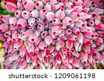 beautiful pink rose in the... | Shutterstock . vector #1209061198