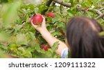 young beautiful farmer girl... | Shutterstock . vector #1209111322
