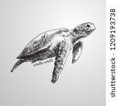 Loggerhead Sea Turtle  Caretta...