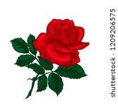 red rose isolated on white...   Shutterstock .eps vector #1209206575