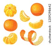 Vector Set With Tangerines...