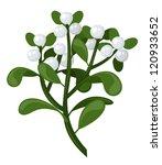 mistletoe branch. vector...   Shutterstock .eps vector #120933652