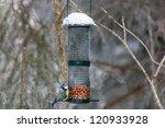 Blue Tit At A Bird Feeding In...